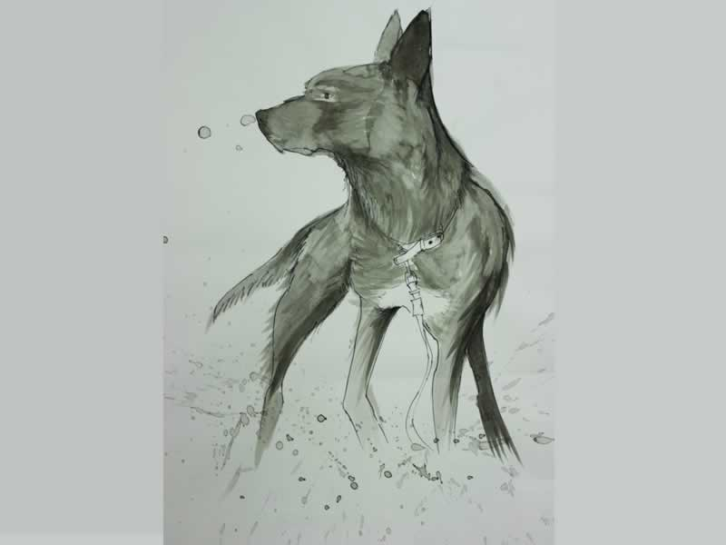 Pencil drawing of dingo